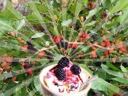 mail order fruit auc gifuryokuen rakuten global market no 4 5 suite marbury
