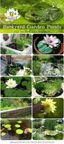 138 best gardening projects images on pinterest gardening
