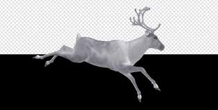 white reindeer jump run cycle right side view by videomagus