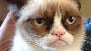 Original Grumpy Cat Meme - i met grumpy cat and now my life is complete catster