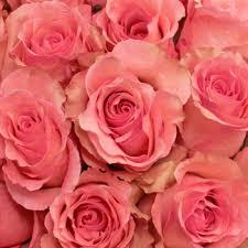 bulk roses bulk pink roses
