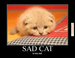 Sad Kitten Meme - sad quotes memes sadness is weknowmemes