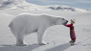 what are some interesting facts about the arctic for kids