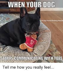 French Bulldog Meme - when your dog chicago french bulldog rescue startscom municating