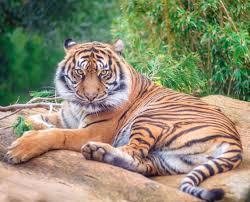 sahebrao has overcome poachers and renal failure and may get a