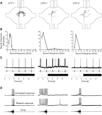 neural mechanisms for acoustic signal detection under strong