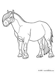 pony coloring pages 13 animals of the world coloring books for