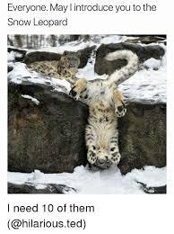 Funny Snow Memes - 25 best memes about snow leopard snow leopard memes