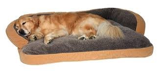 Dog In Bed Meme - dog in bed meme dogs elevated dog beds furniture thewhitestreakcom