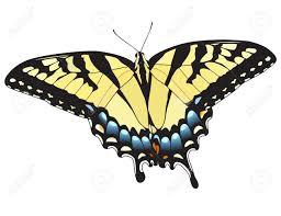 eastern tiger swallowtail butterfly vector royalty free cliparts