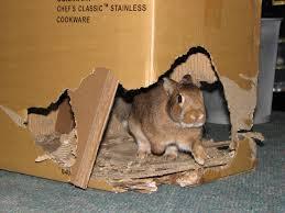Build A Small Castle Cardboard Castle For Your Pet Rabbit