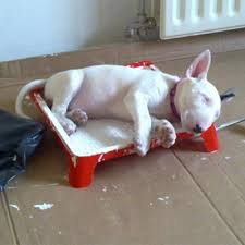 bull terrier puppy archives children u0027s picture books