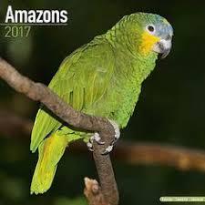 black friday calendar amazon 2018 budgie calendar budgies parakeet bird and parakeets