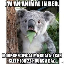 Animal In Bed Meme - i m an animal in bed more specifically a koala i can sleep for 22