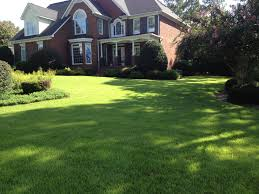 new lawns best type of sod and grass columbia sc