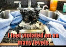 I Feel Violated Meme - i feel violated on so many levels cat animal and funny animal