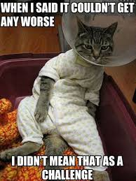 Funny Cats Meme - top 25 funny cat memes cutest cats