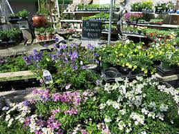 Nursery Plant Supplies by Mcshane U0027s Nursery And Landscape Supply