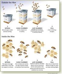 bee queen life cyclo clipart black and white