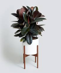 how to update your house how to choose a plant for every room in your house plant care