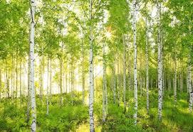 tree wallpaper qygjxz