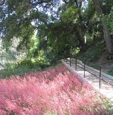 Santa Ana Botanic Garden by 116 Best Botanical Gardens Images On Pinterest Botanical Gardens