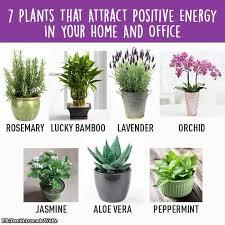 plante de bureau feng shui 7 plantes qui attirent l énergie positive dans votre maison ou