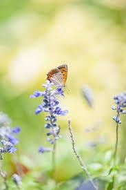 26 best flowers by takashi suzuki images on pinterest flowers