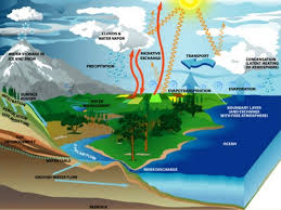 glencoe biology chapter 2 principles of ecology