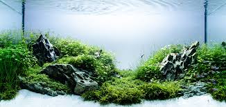 Plants For Aquascaping Aquascaping Basics Planted Aquarium Substrate U2022 Aquascaping Love