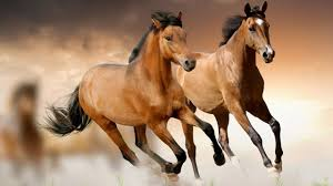 mustang horse 13 things you didn u0027t know about the mustang horse youtube