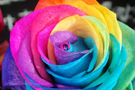 multicolor roses awesome multicolor only beautiful roses