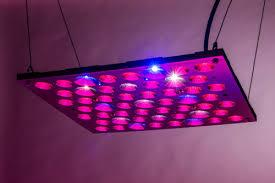 1000 watt led grow light reviews bonsai hero 150 watt led grow light panel review