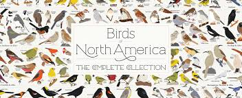 new birds of north america poster 740 species