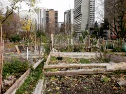 community gardens ready to brave the winter city unlimited