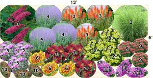 10 Best Perennials And Flowers by Drought Tolerant Garden Pre Planned Gardens From American
