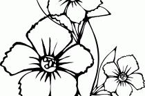 snake coloring sheet www bloomscenter