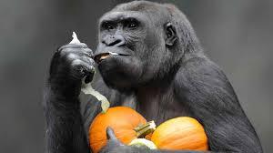 zoo animals celebrate halloween abc7ny com