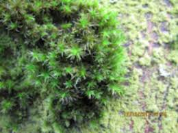 how tree moss could revolutionize what we about air pollution