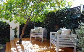 albero giardino alberi da frutto per un giardino non sia fioritura