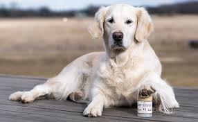 boxer dog feet amazon com naturaldog com paw soother organic all natural