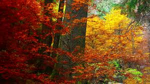 leaves blowing colorful park autumn fall stock footage