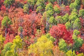 5 of the best places in utah to see the fall colors ksl com