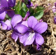 home decor violet color pictures light purple colour meaning