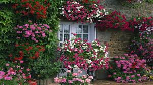 flower house if you want to flower garden ideas with house images
