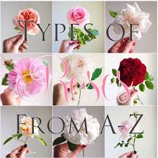 All Types Of Flowers List - the 25 best types of roses ideas on pinterest david austin