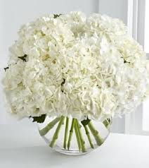 best 25 white hydrangeas ideas on pinterest white hydrangea