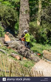 forestry worker stock photos u0026 forestry worker stock images alamy