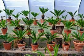 moving tropical plants indoors the martha stewart blog