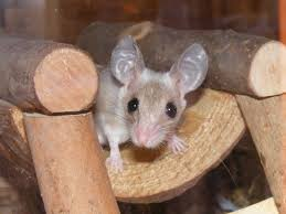 Are Mice Blind Baby Mouse